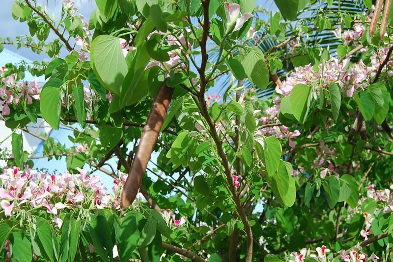 orchidee arbre