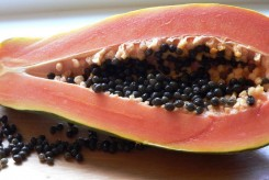 PAPAYER - CARICA PAPAYA